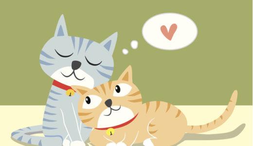 猫のぬいぐるみの選び方と人気おすすめ10選